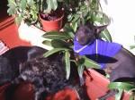 Durmiendo en las plantas de mi mamá